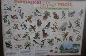 Lerntafel einheimische Singvögel